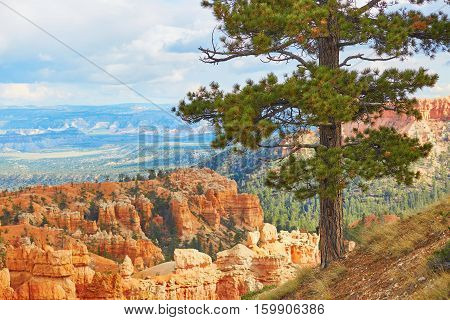 Red Sandstone Hoodoos In Bryce Canyon National Park In Utah, Usa