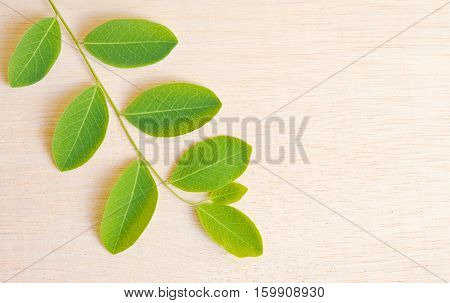 Moringa Plant Leaf Isolated On Wooden Board Background With Blank Copy Text Space