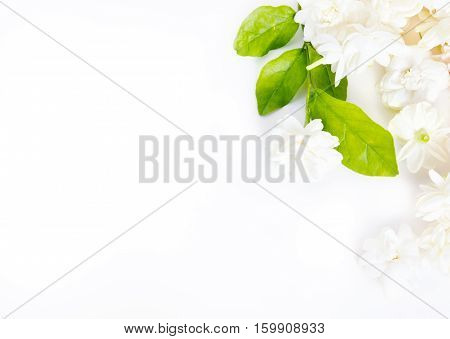 Jasmine Flower On White Background With Blank Copy Text Space