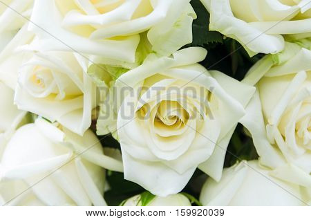 Beautiful bunch of white rose flowers background