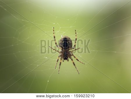 An orb spider building a spiderweb outdoors.