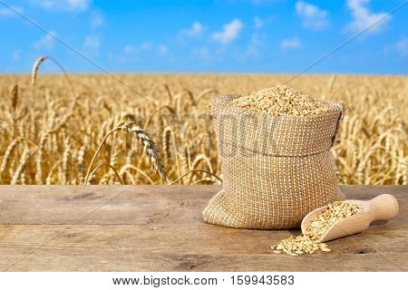 wheat grains in sack. Seeds of wheat in bag on table with golden field on the background. Agriculture and harvest concept. Gold wheat field and blue sky with cloud. Harvest with copy space area for a text