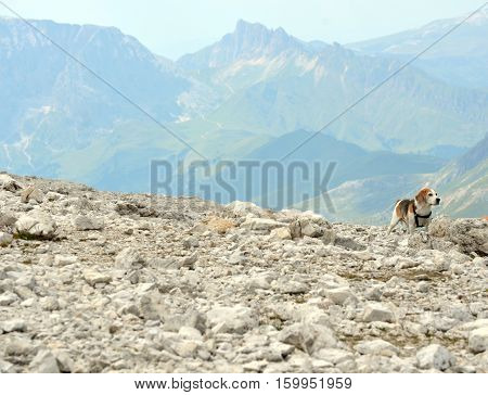 Lovely little dog on rocky outcrop in mountain