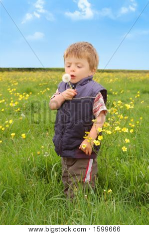 Toddler Holding A Dandelion