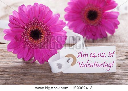 Label With German Text Am 14. Februar Ist Valentinstag Means February 14th Is Valentines Day. Pink Spring Gerbera Blossom. Vintage, Rutic Or Aged Wooden Background. Card For Spring Greetings.