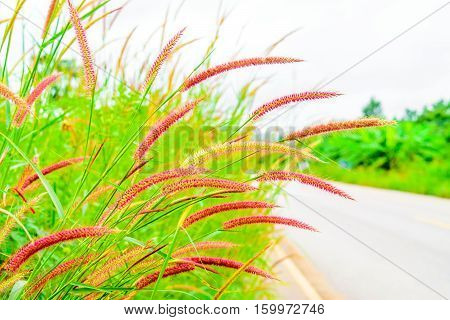 Grass flowers wayside in the sky background.