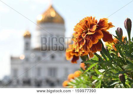 Храм Христа Спасителя. Москва. Православные праздники.