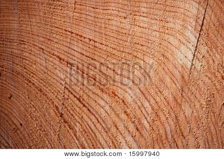 What is under the bark?