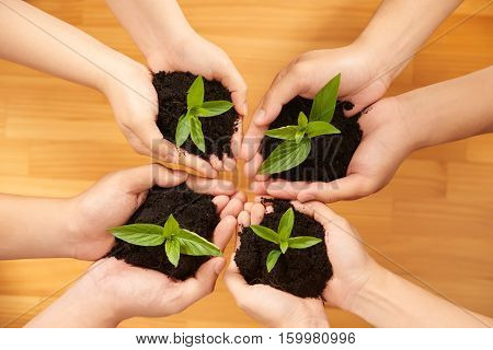 Hands of people holding fertile soil with sprouts