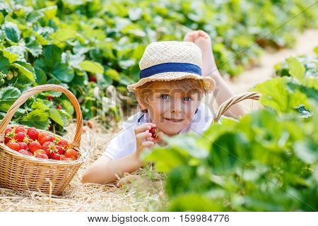 Happy adorable little kid boy picking and eating strawberries on organic berry farm in summer, on warm sunny day. Funny child having fun with helping. Strawberry plantation field, ripe red berries.
