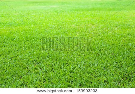 nature green grass field use as background