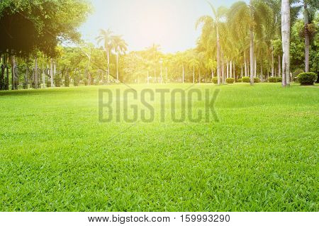 green grass field with light use as backgroundbackdrop