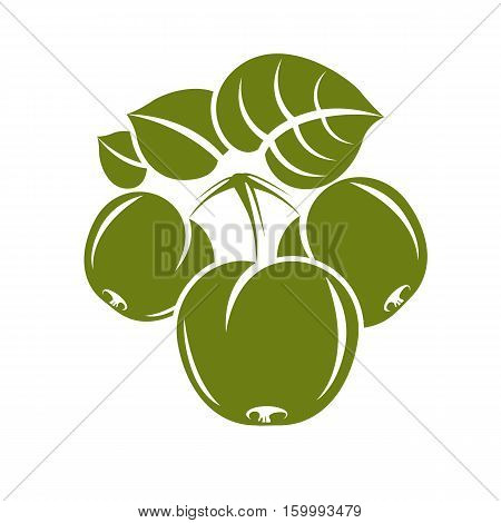 Three Green Simple Vector Apples With Leaves, Ripe Sweet Fruit Illustration. Healthy And Organic Foo
