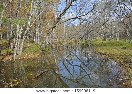 An early autumn on forest marsh. Russian Far-East.