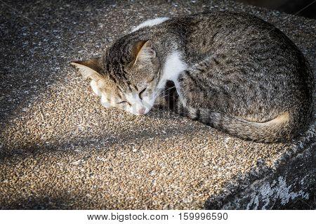 a little cat sleeping bask on the floor