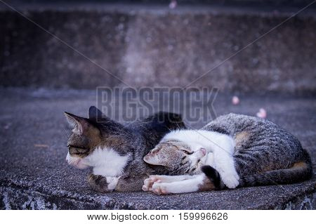a cute cats snuggle on the floor