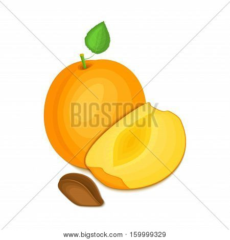 Composition of several apricot. Ripe vector apricot fruits whole and slice appetizing looking. Group of tasty fruits colorful design for the packaging of juice breakfast, healthy eating, vegetarianism