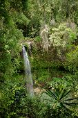 Small waterfall in Amber mountain national park with richest biodiversity. Madagascar virgin nature landscape. poster