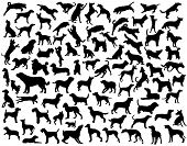 Collection of vector silhouettes of various dog breeds and poses poster