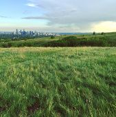 Summer field landscape.  Field with hills, isolated trees, bright lush green grass and trail through grass. Bright blue sky and large dark cloud at sunset with Calgary downtown buildings in background. poster