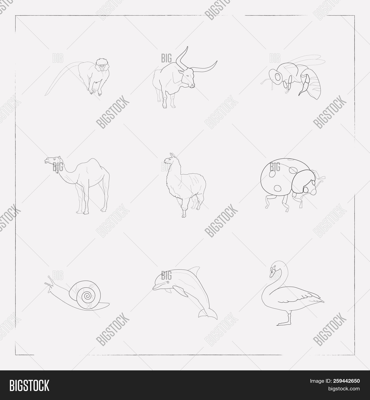 set of zoology icons line style symbols with dolphin, lama, snail and other  icons