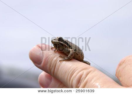 a male