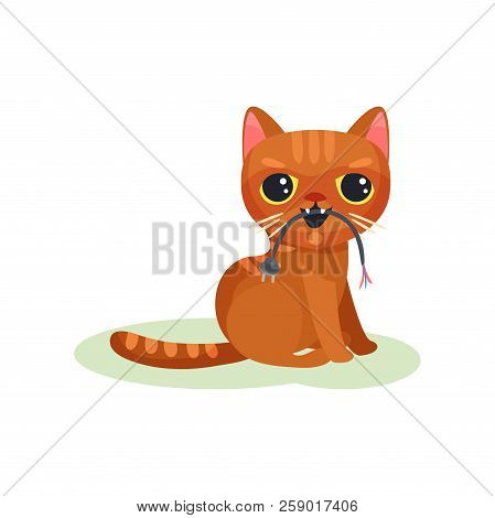 Naughty kitten gnawing wire with plug, mischievous cute little cat vector Illustration on a white background poster