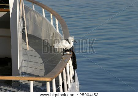 "a ""great white egret"" ""Ardea alba "" enjoys life in southern californias costal waters poster"