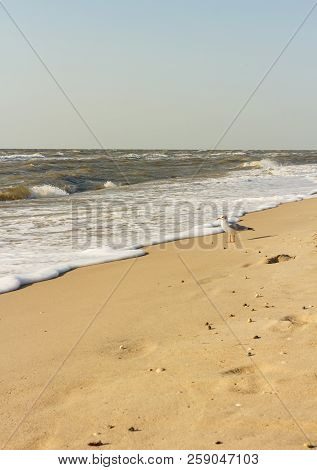 Sandy Shore Of Warm Sea, Seagull, Waves