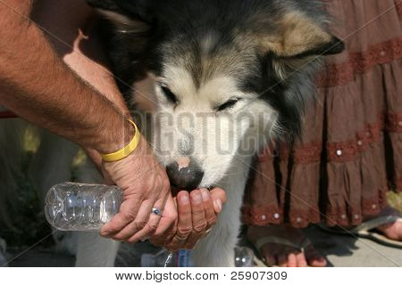 a dog drinks water from a persons hand while everyone watches in horror as the wild fires in santiago canyon burn up their homes and properties