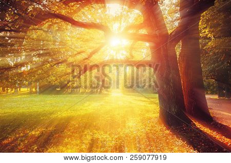 Fall picturesque landscape. Fall trees with yellowed foliage in sunny October park lit by sunshine. Colorful fall landscape in picturesque tones. Fall forest at sunset