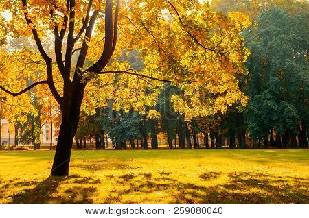 Fall landscape park scene. Sunny fall park lit by bright sunshine. Fall trees in the park in sunny fall weather. Colorful fall trees in the park
