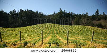 Napa Valley the
