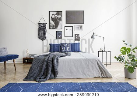 Navy Blue Carpet In Front Of Grey Bed With Blanket In Bedroom Interior With Plant And Posters. Real