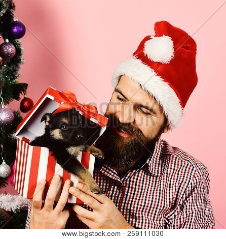 Pet For Christmas Concept. Guy With Happy Face Unpacks Present