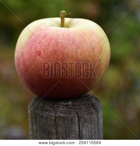 Beautiful And Delicious Single Redish Apple On Top Of A Pole
