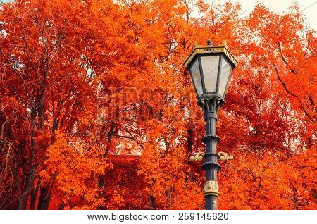 Fall trees background. Metal lantern on the background of the fall trees. Fall park scene in vintage tones. Colorful fall nature background, fall park nature