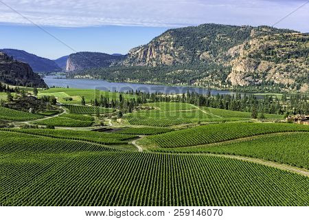 Wine Vineyards In The South Okanagan Near Pentiction British Columbia Canada With Vaseux Lake And Mo