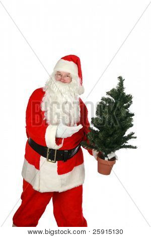portrait of Santa Claus holding a small christmas tree  isolated on white with room for your text