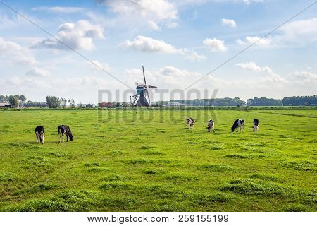 Typical Dutch Polder Landscape With A Grazing Cows In The Meadow. An Old Windmill  Is In The Backgro