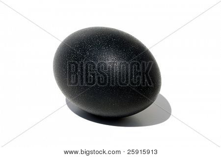 emu egg isolated on white with its shadow