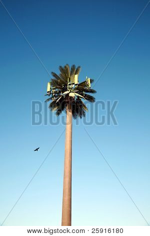 Cellular Phone tower disguised as a palm tree