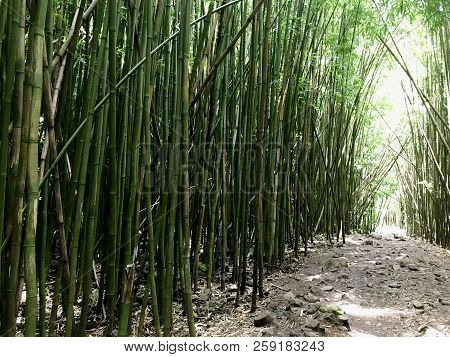 Bamboo Forest On Maui With Path Leading Deeper Into Solitude And Peaceful Contemplation