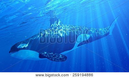 3d rendered illustration of an orca