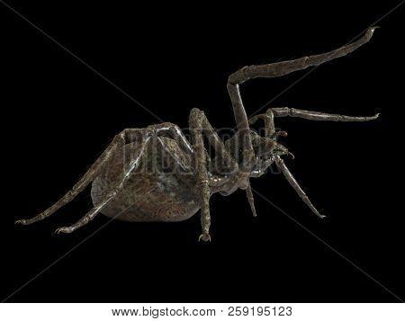 3d rendered illustration of a giant spider