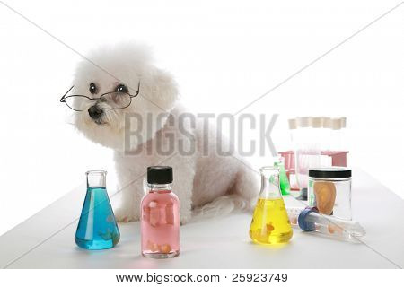 Fifi the Bichon Frise works in a labratory and experiments with cloning human beings