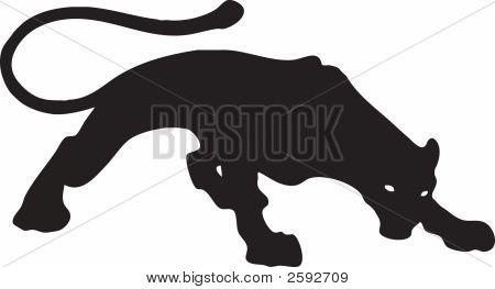 Black Puma 1