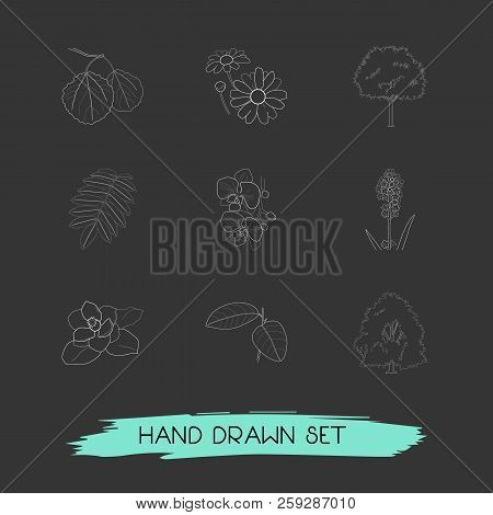 Set Of Plant Icons Line Style Symbols With Rowan, Magnolia, Hornbeam And Other Icons For Your Web Mo