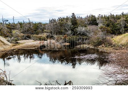 Vessels Brook Ponds And The Vire Of The St Lawrence Seasway, Gros Morne National Park, Newfoundland,