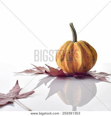 Decorative Colorful Mini Pumpkin